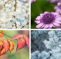 kleurtypes in 4 seizoenen